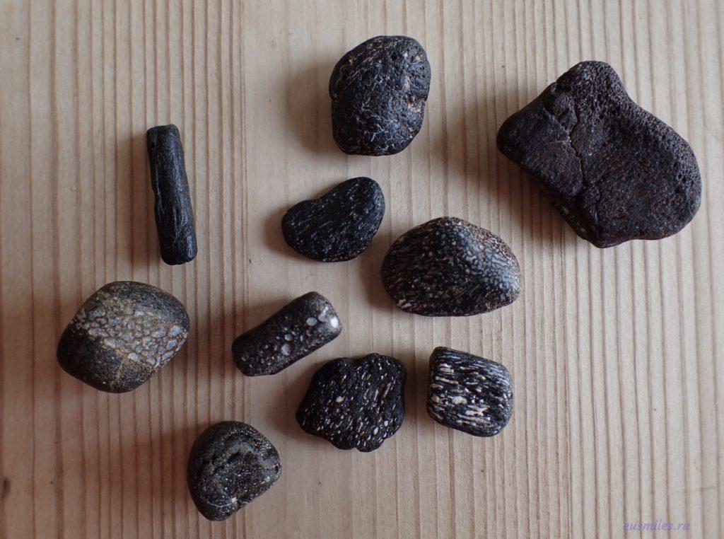 Окаменелости, собранные на пляже в заливе Комптон на острове Уайт - кости динозавра (похожи на черные камни с белыми вкраплениями)