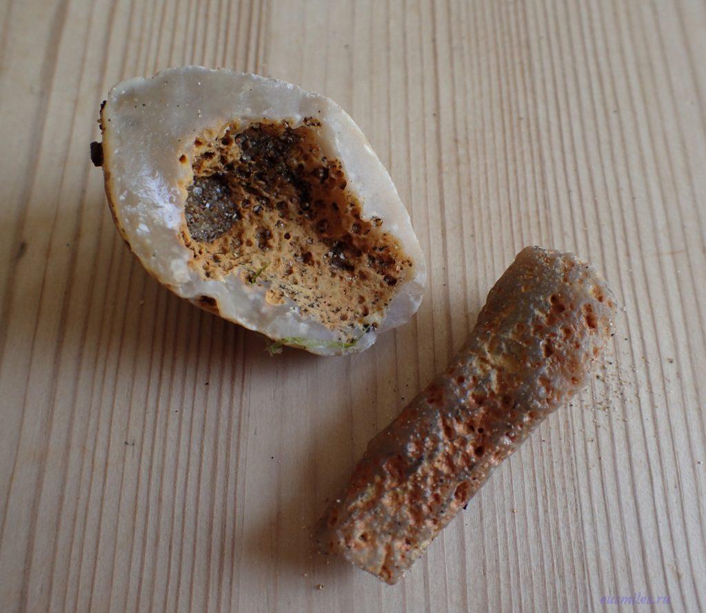Окаменелости, собранные на пляже в заливе Комптон на острове Уайт - камни с большим количеством незаполненных полостей - отпечаток губки