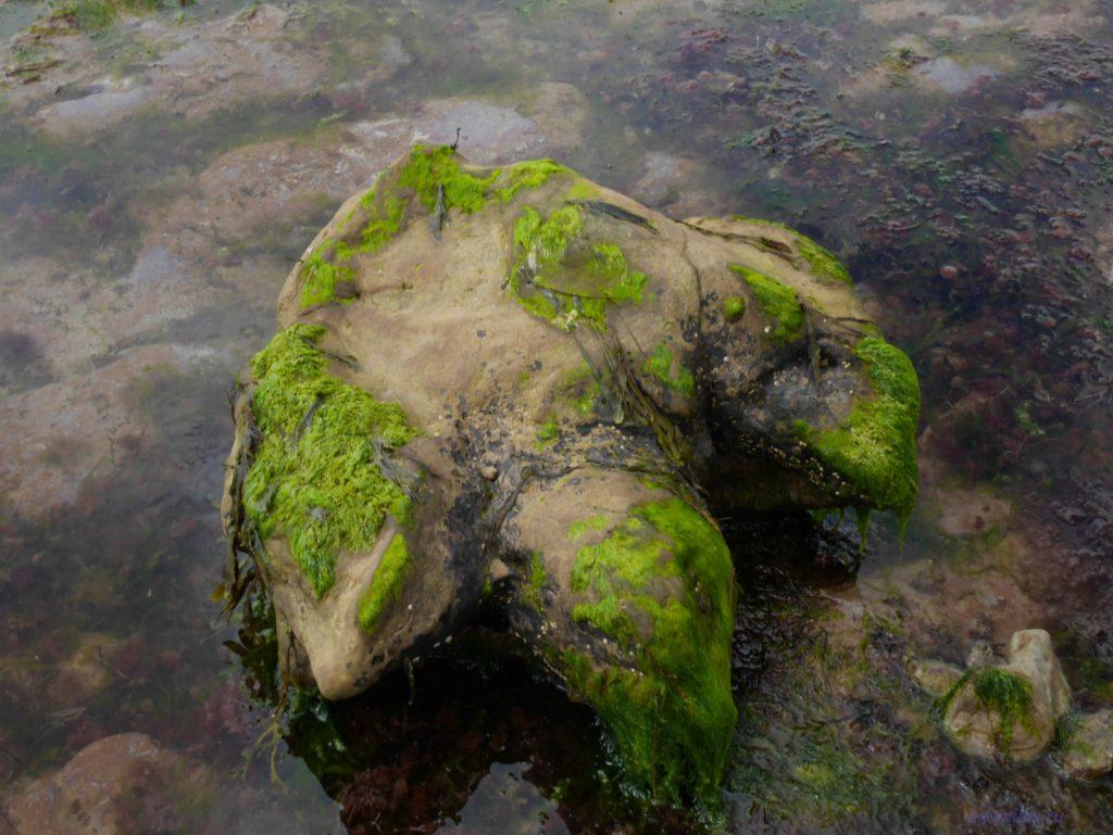 Камень в форме стопы динозвра, стоящий в воде. Сверху отпечатан маленький след