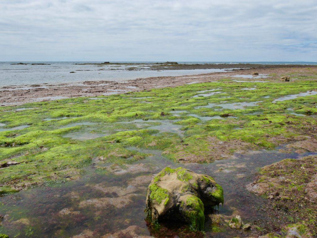 Пляж в заливе Комптон на острове Уайт - море и след динозавра