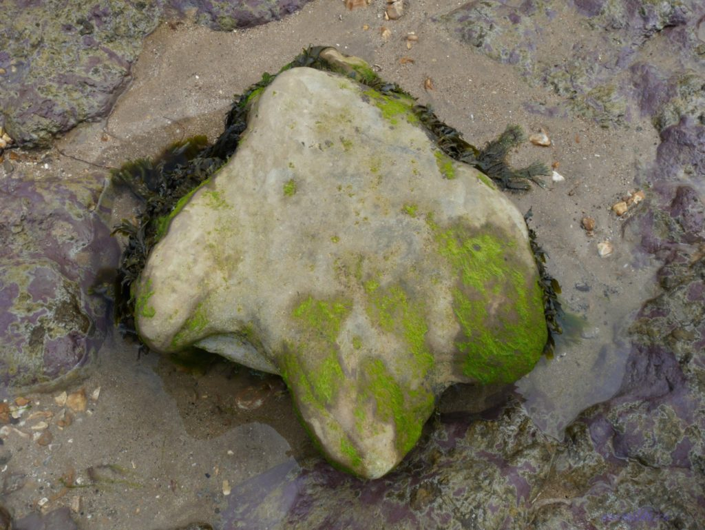 Следы динозавров и древние окаменелости на острове Уайт