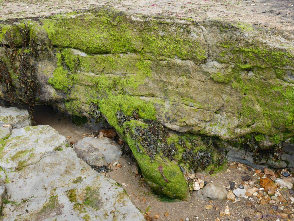 Слой земли/камней, из-под которого видно след динозавра